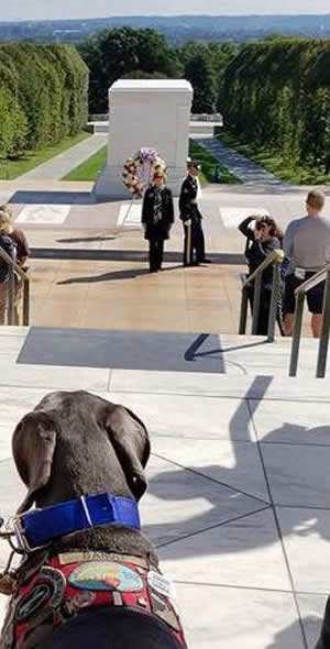 Bandit was invited to Arlington National Cemetery to oversee a wreath laying ceremony.