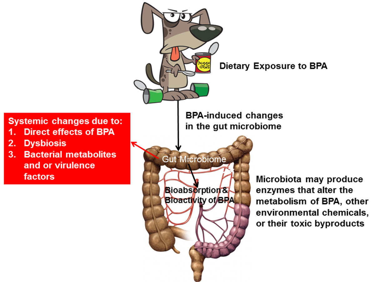 Rosenfeld and her team assessed BPA contained within pet food cans. They also analyzed whether disturbances in bacteria found in the gut and metabolic changes could be associated with exposure to BPA from the canned food.