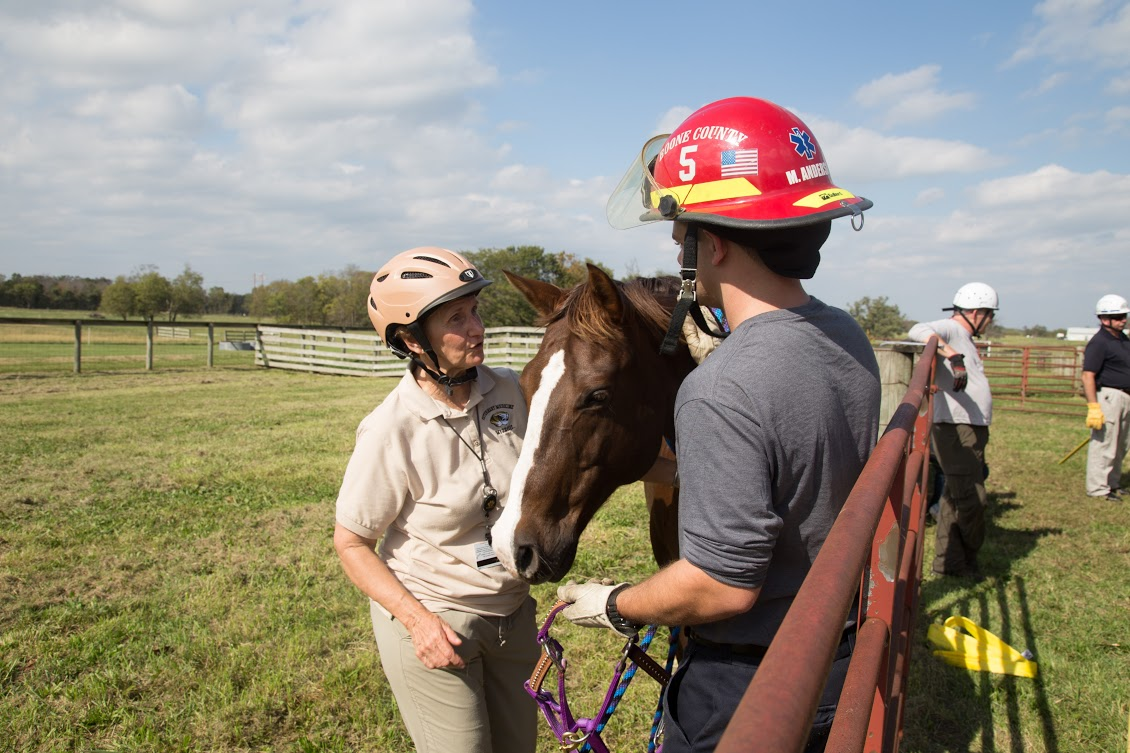 Vogelweid teaches a firefighter how to halter a horse during an exercise for firefighters about approaching and catching loose horses.