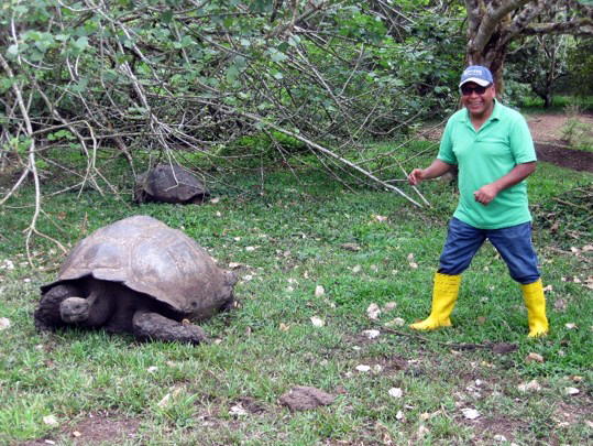 Research specialist Abel Vega approaches a giant tortoise during a visit to the Galápagos Islands.
