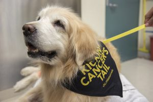 The University of Missouri Veterinary Health Center is recruiting dogs with cancer for a new clinical trial that is being conducted in partnership with the National Cancer Institute