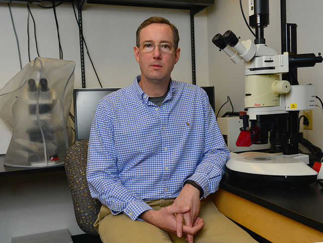 Chris Lorson, associate dean for Research and Graduate Studies in the University of Missouri College of Veterinary Medicine, has received four grants from the National Institutes of Health to continue his research on neurodegenerative diseases, including spinal muscular atrophy (SMA) and spinal muscular atrophy with respiratory distress type 1 (SMARD1).