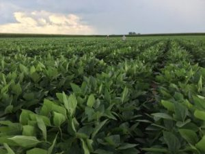 Elemental Enzymes' products, which range from seed treatments to fertilizer enhancements, help increase plant health, growth and overall food production.
