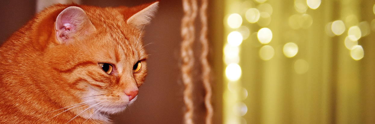 Cats May Help Increase Empathy, Decrease Anxiety for Kids with Autism