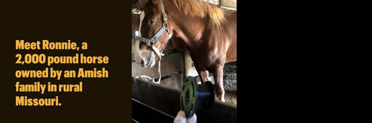 3D Printing Helps Amish-owned Horse Recover Post-tracheotomy