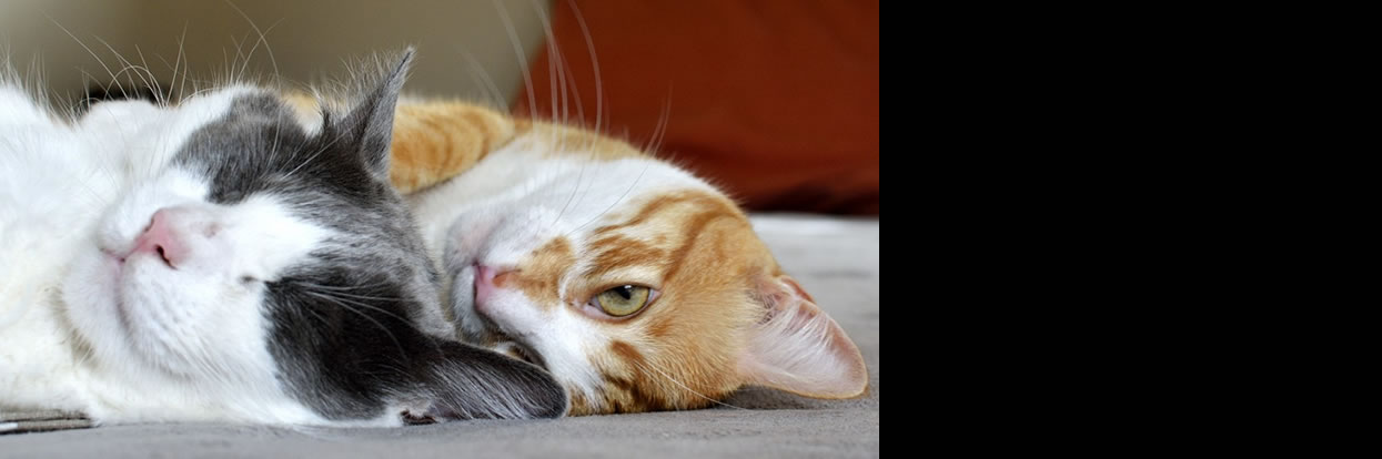 Cats Less Stressed After Adoption by Families with Children with Autism, MU Study Finds