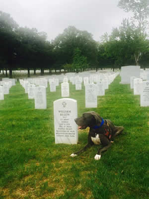 Bandit at Arlington.