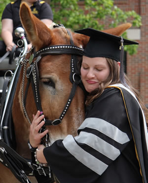 New veterinarian Laurel Marshalek gives Tim Mule a hug after the graduation ceremony. Each year the CVM Mule Team attends a post-ceremony reception for new graduates who want photographs with the college mascots.