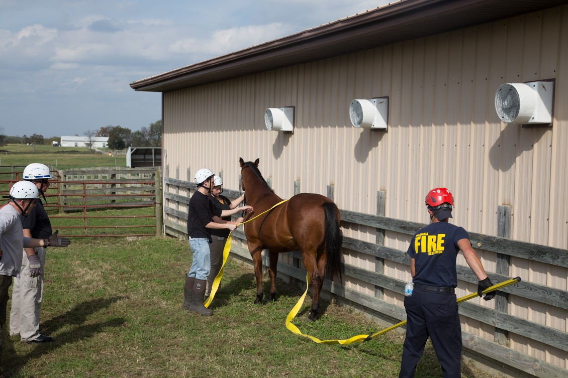 Instructors Keith Branson, DVM, and Battalion Chief Chuck Leake (on left) supervise the placement of rescue straps around a horse by using a pike pole to manipulate the strap from a safe working distance. VM-2 students Lyndsy Gieche and Jordan Rice (center) are assisting the firefighter with strap placement.