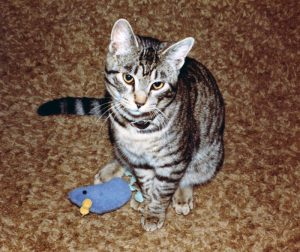 Stanley was the Warshawskys' first cat. They made their first gift to the CVM in his memory when he passed away in 1994.