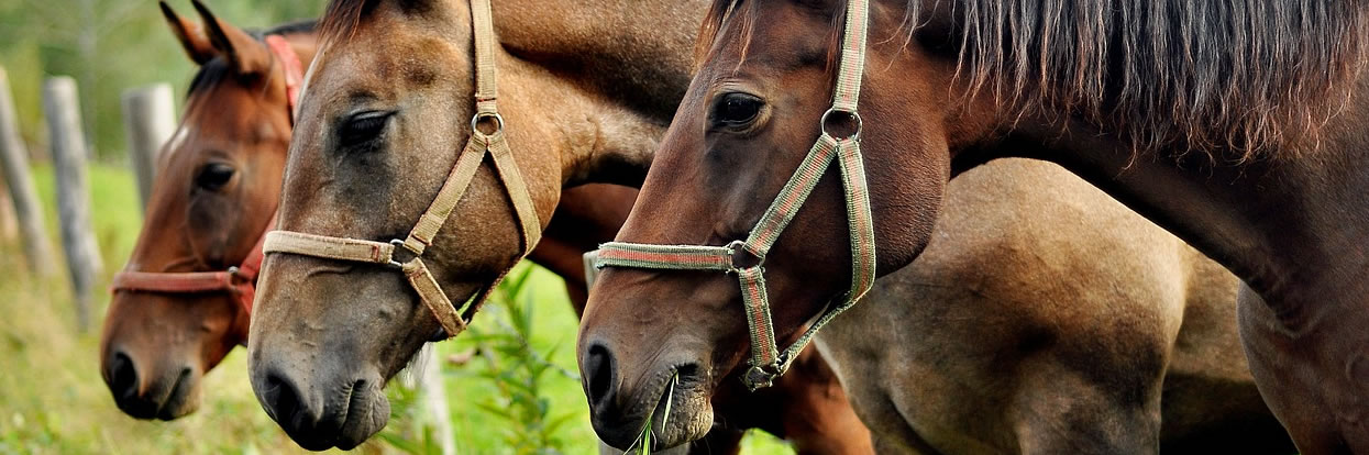 Coronavirus: Disease in Horses is Different to Humans