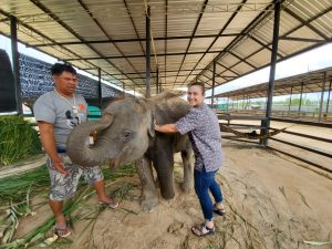 Van Kan working with a young Asian elephant in Thailand