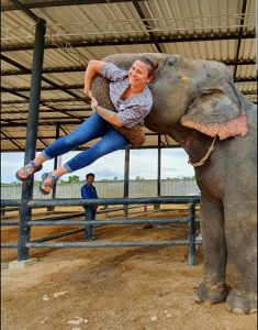 Van Kan being lifted by an adult Asian elephant