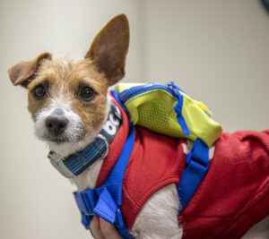 Ruby has more than 1,000 followers on Instagram. She often wears a red hoodie and a backpack, where she carries treats.