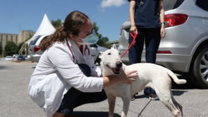 One change in Veterinary  Heath Center procedures to help prevent COVID-19 from spreading was  to have students and clinicians to meet with clients in the parking lot before bringing animals inside for treatment.