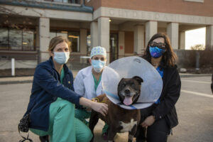 Wiggles' care team (from left) Brittney Byer, DVM, Megan Mickelson, DVM, and veterinary student Ayla Khan, gather around her as she prepares to leave the Veterinary Health Center.