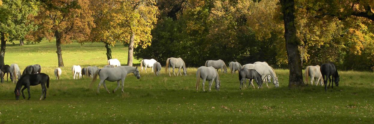 Equine Health Seminar 2021 – Horse Owner Seminar
